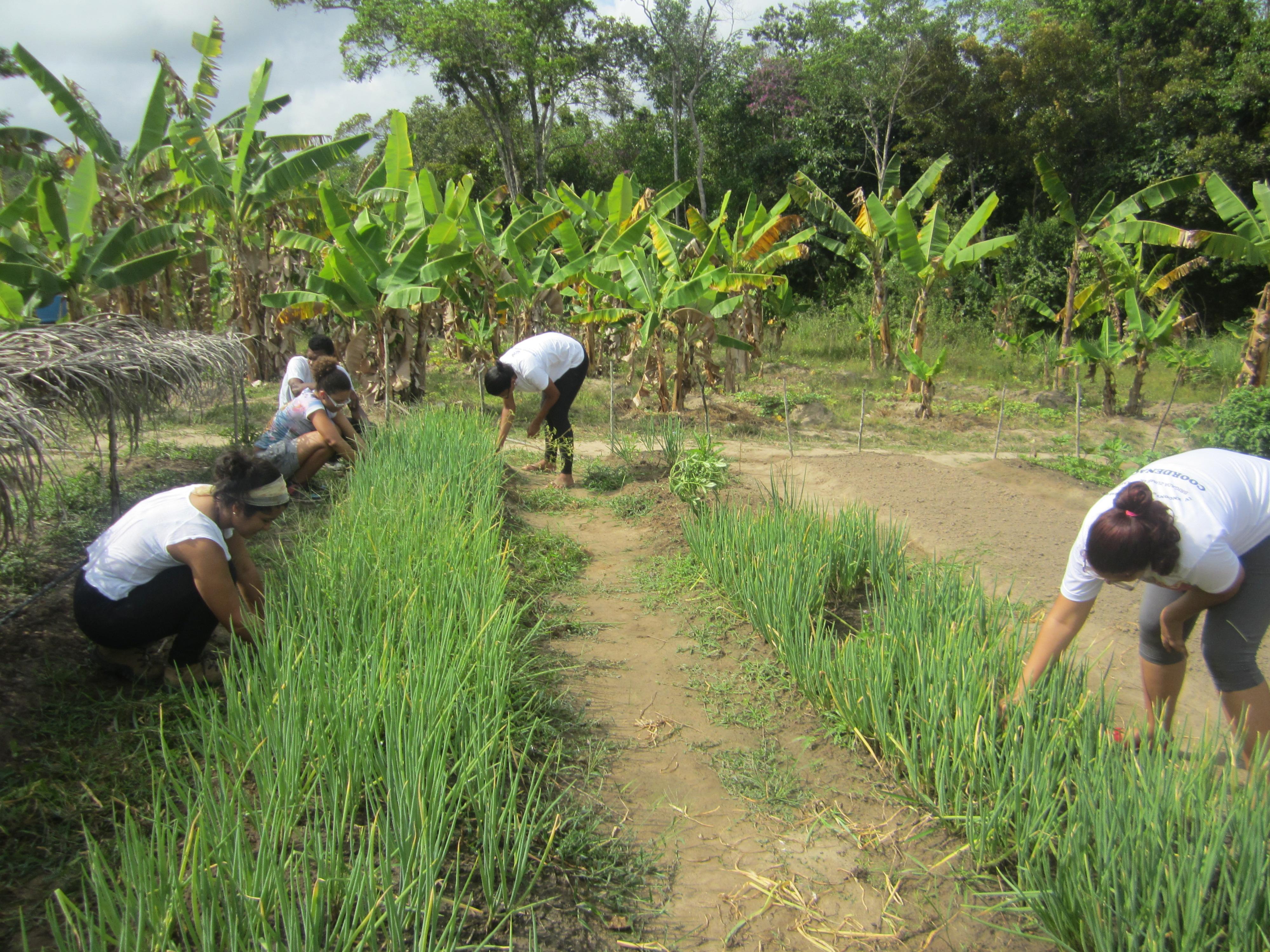 Foto cedida pelo projeto Formação em agroecologia