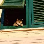 Como está a quarentena de quem mora sozinho?