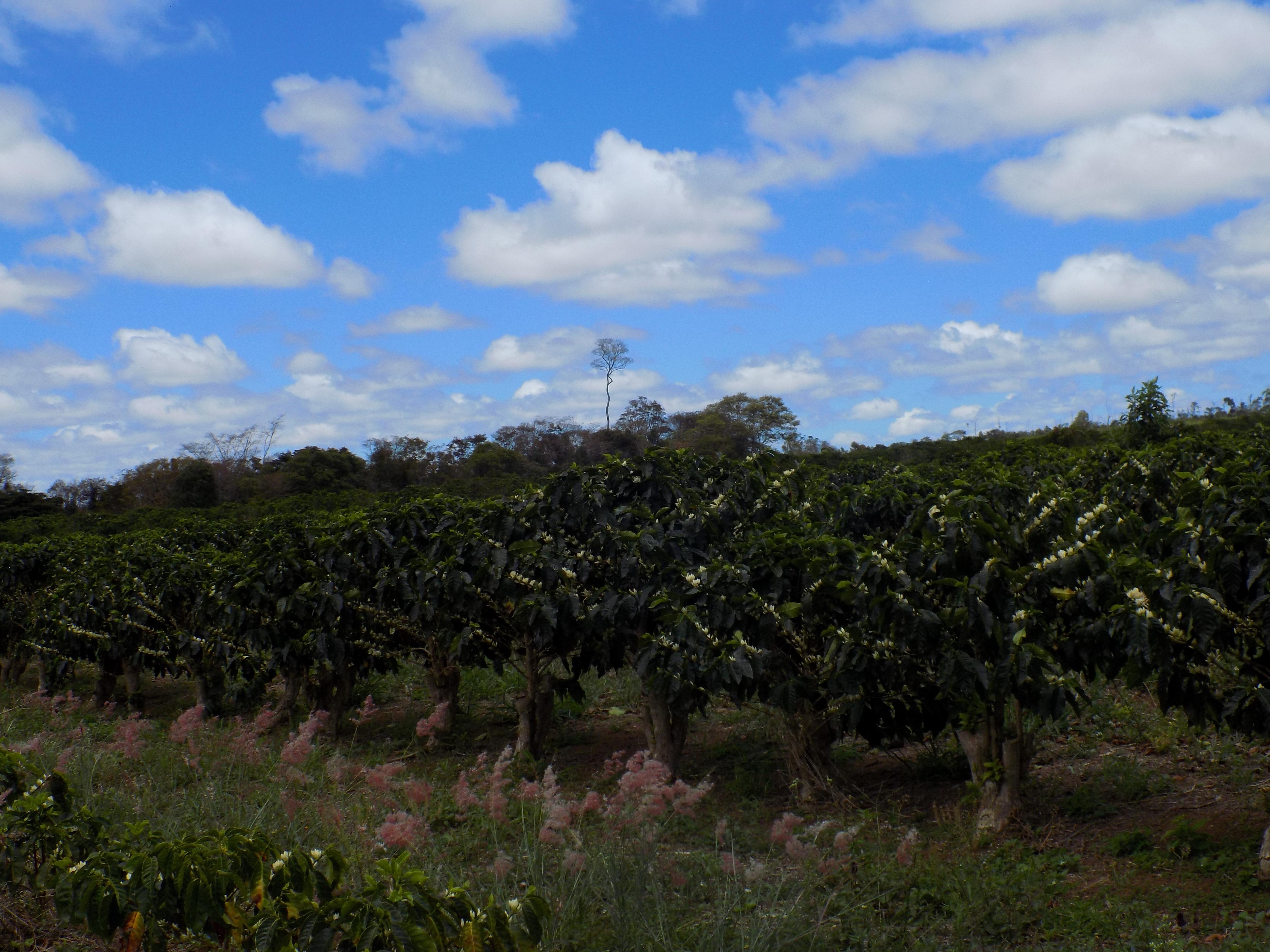 Fazenda Igaraçu/Divulgação