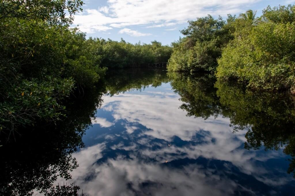 As APPs previnem os recursos hídricos da erosão principalmente com a presença de vegetação nativa (Foto: Marcelo Delfino)
