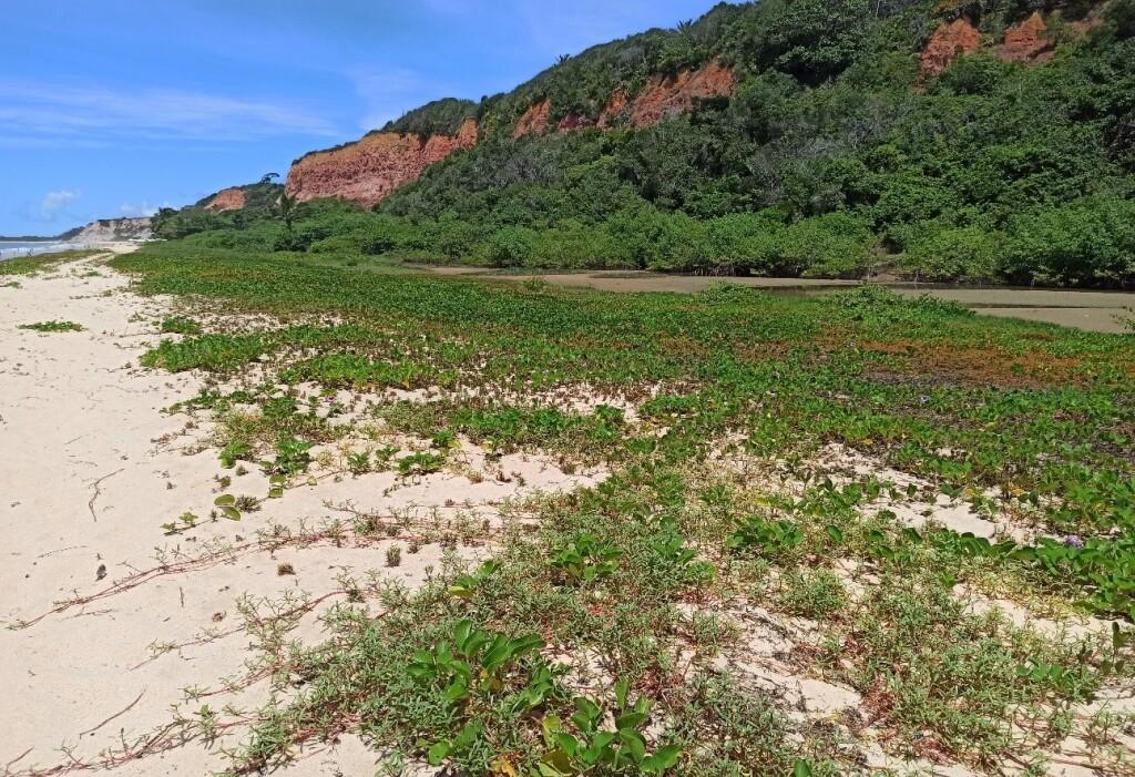 As restingas são faixas com vegetação mais baixa próxima ao mar ou mais alta para o interior de planícies (Foto: Marcelo Delfino)