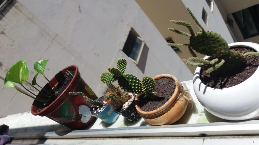 Plantas cultivadas por Melissa em casa (foto: acervo pessoal)
