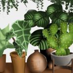 Plantar para colher: benefícios e dicas de cultivar no isolamento